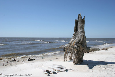 The beach along scenic Highway 98 - the remnants of many old trees remain.