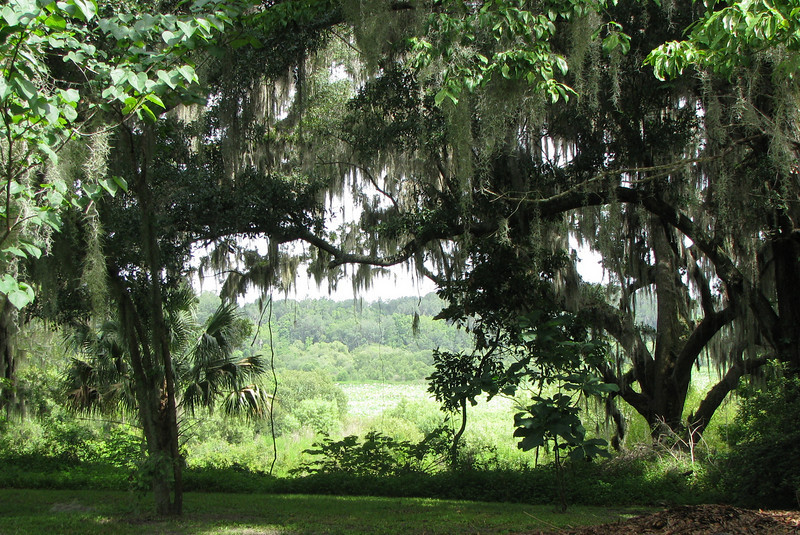 View of Meadow in Kanapaha Gardens - Gainesville, FL