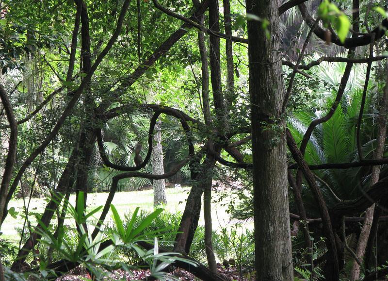 Vine Nature Art - Kanapaha Gardens - Gainesville, FL
