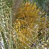 Palm In Bloom Near Quiznos - Gainesville, FL