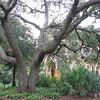Chapel by Lake Alice - Univ. of Florida