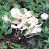 Fungus - Kanapaha Gardens - Gainesville, FL
