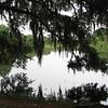 Along Trails at Lake Alice - Univ. of Florida