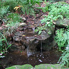 Woodland Pond - Kanapaha Gardens - Gainesville, FL
