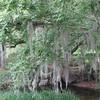 Paths Along Lake Alice - Univ. of Florida