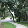 Roadside Walks Near Lake Alice - Univ. of Florida