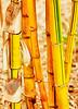 Bamboo Key West Style