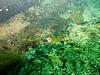 Underwater at the Catfish Hotel