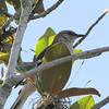 Magnolia Mockingbird - Orlando Hotel