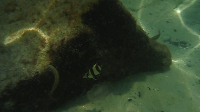 Video clip - snorkeling at St. Andrews State Park, FL