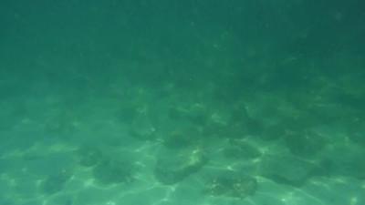 Video clip - snorkeling at St. Andrews State Park, FL