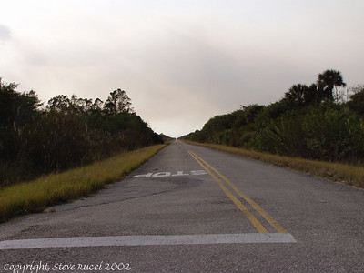 "Road in Golden Gates Estates ""Neighborhood"", off of Janes Memorial Scenic Drive - Near Fakhatchee Strand State Preserve"