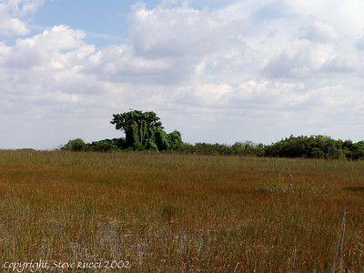 Looking out into the Everglades from the Tram Road, Shark Valley - Everglades National Park