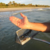 Sifting for Treasures on Venice Island Beach