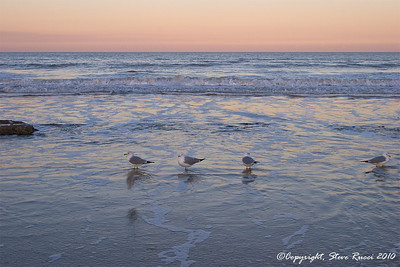 Seagulls along the beach at Washington Oaks Gardens State Park, Florida.