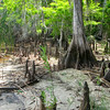 Disney Nature Preserve<br /> 28.129553°<br /> -81.430092°