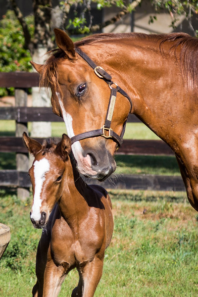 Mare and just days old foal.