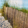Dune Fence on Beach