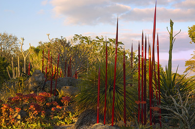 DSC_0416 RS Chihuly at Fairchild