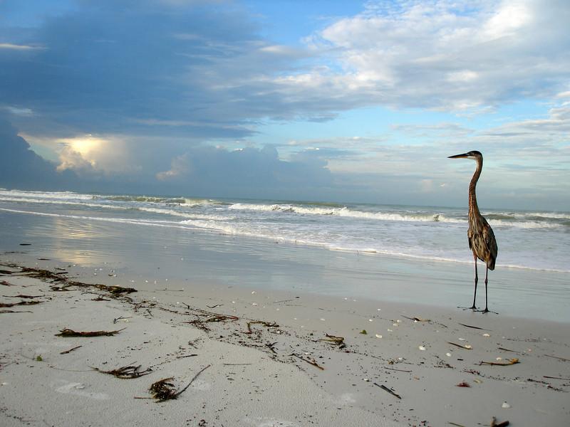 Florida is waiting...
