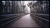 Boardwalk at Grassy Waters Preserve in Palm Beach, FL.