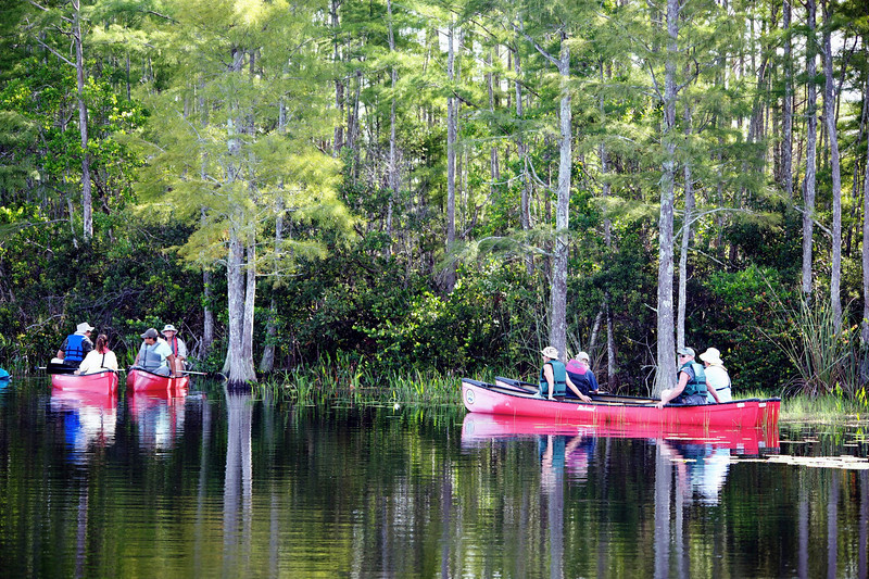 Canoes in the swamp.