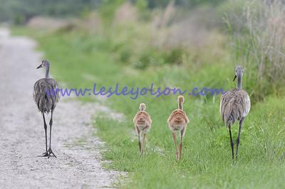Crane Family dinner stroll.  Circle B Bar Reserve.