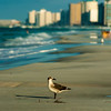 destin florida beach scenes