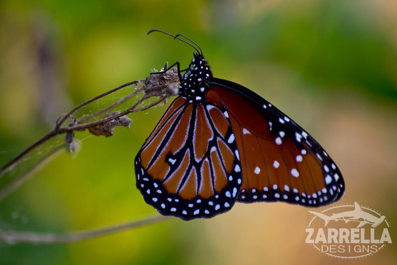 """Butterfly"" (Everglades National Park, Florida)"