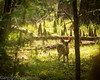 Peeking through the lens, near High Springs, Florida.