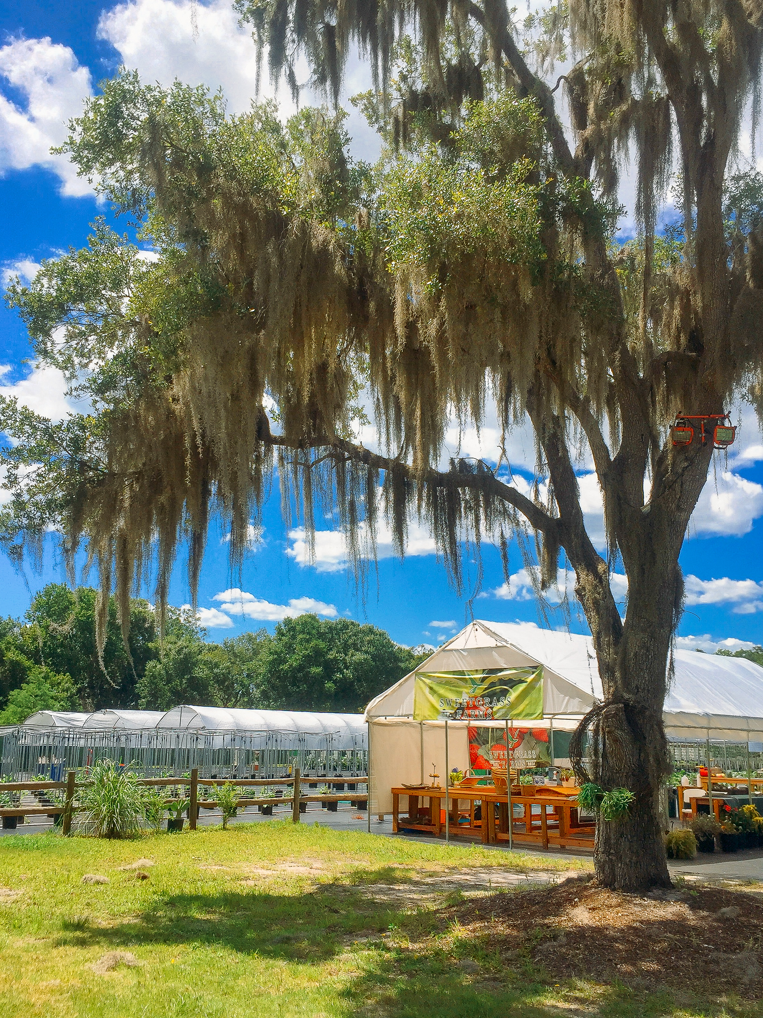 Sweetgrass Farms in Sarasota is an aquaponic farm and one of the best things to see in Sarasota.
