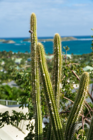Lots of cacti on the island.