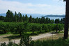 Cherry orchard on Flathead Lake.