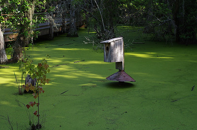 Audubon Swamp Trail at Magnolia Gardens - Charleston, SC