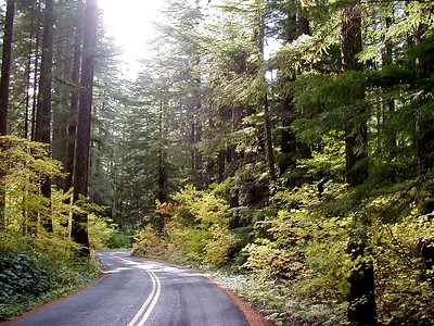 10/15/01 - Oregon SR242, closed to larger vehicles, winds through luxuriant foliage on the west side of McKenzie Pass, west of Sisters, OR.