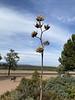Yucca blossoms.