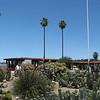 Native Cactus garden.