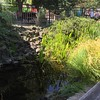 Koi pond at Eola Hills winery.