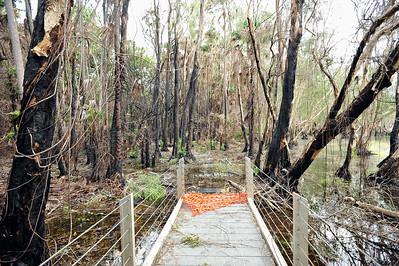 Monsoon Forest Walk, December 2015