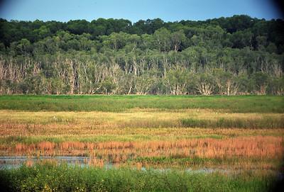 Fogg Dam Conservation Reserve, NT, Australia. April 2015