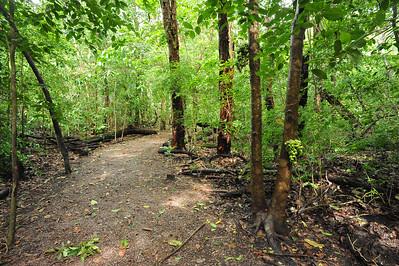 Monsoon Forest Walk. December 2015