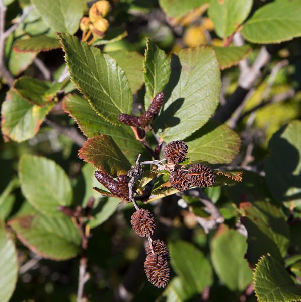 Bush in fall color
