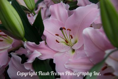 Rhine Cruise Flowers-3210