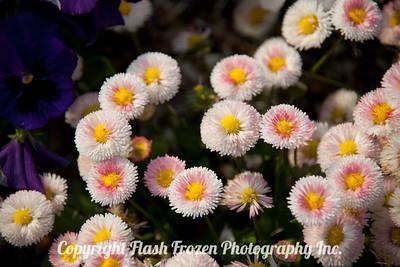 Rhine Cruise Flowers-3010