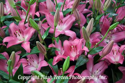 Rhine Cruise Flowers-3198
