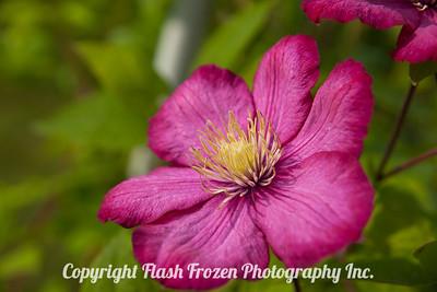 Rhine Cruise Flowers-3002