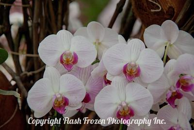 Rhine Cruise Flowers-3036