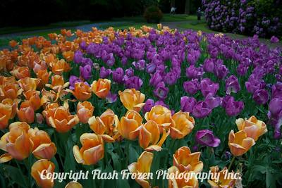 Rhine Cruise Flowers-3182