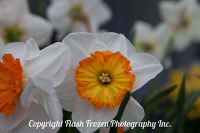 Rhine Cruise Flowers-3186