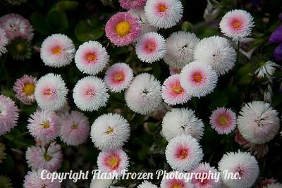 Rhine Cruise Flowers-3014